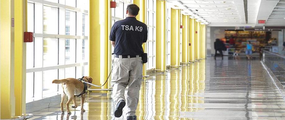 TSA patrol