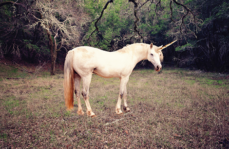 Waiting for a unicorn can leave you by the side of the road